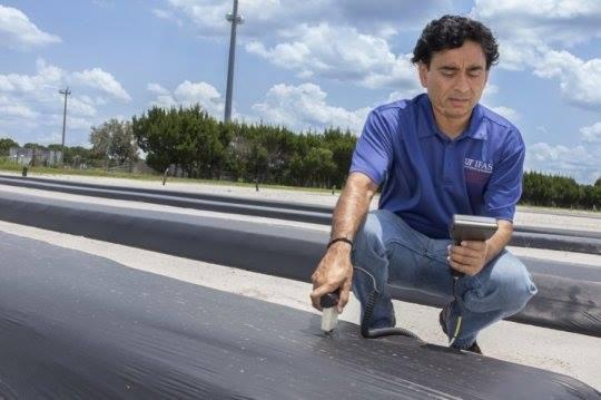 """""""Sanjay Shukla testuje """"kompaktní geometrii řádků"""" na floridské farmě vOberone,"""" Zdroj: UF/IFAS"""