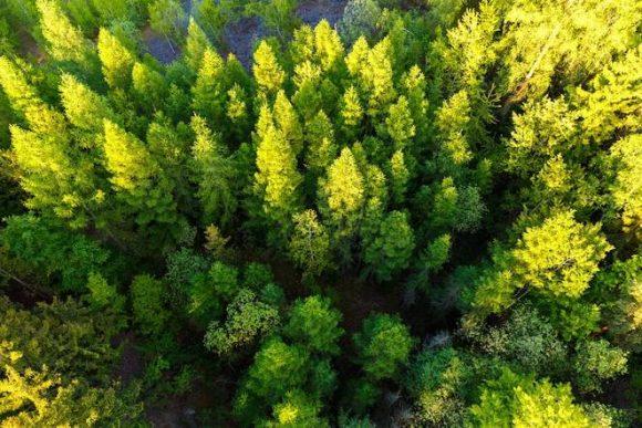 """""""Indie plánuje postupnou výsadbu 95 milionů hektarů lesního porostu. Začíná se vUttar Pradesh."""" Zdroj: Petr Kratochvil"""
