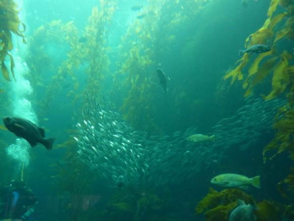 Větrné elektrárny vytvořily členitější dno, což se rybám líbí. Zdroj: forcedgreen.com