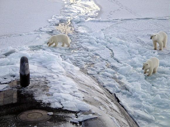 Ubývání arktického ledu znamená kritické ohrožení životního prostředí mimo jiné i pro polární medvědy. foto: Yeoman Alphonso Braggs, US-Navy, licence public domain