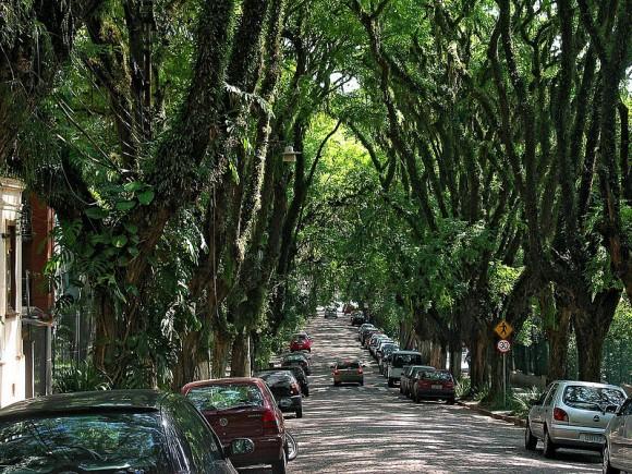 Za stromy lemující Rua Gonçalo de Carvalho v Porto Alegro se místní museli bít. foto: licence Creative Commons