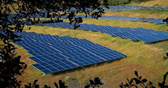 """""""Solární farma nemusí vypadat jako poušť, ale klidně jako zelené louka plná ptačího zpěvu."""" Zdroj: Michael Mees"""