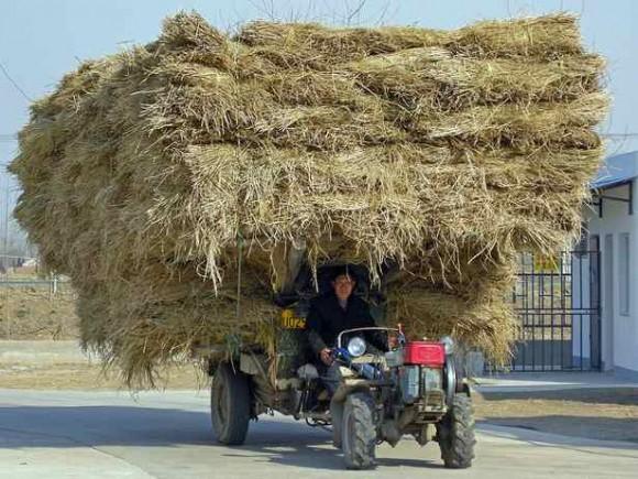"""""""Zpracování biomasy zatím stojí stranou čínských zájmů. To se má ale změnit."""" Zdroj: bioenergyconsult.com"""
