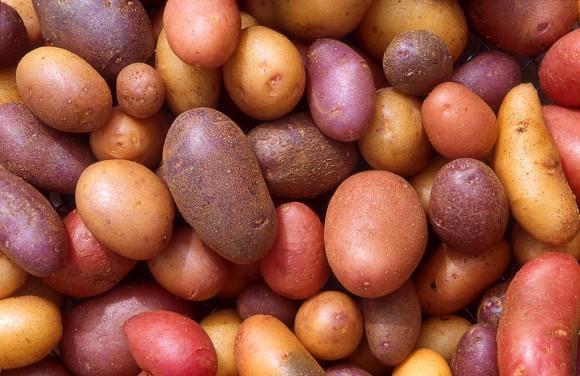 """""""Lidstvo pěstuje brambory už 8500 let, ale pořád nás mají čím překvapit."""" Zdroj: Scott Bauer/ USDA ARS"""