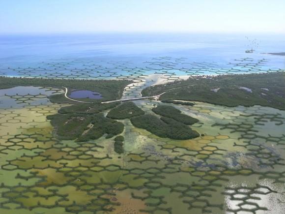 Calotrop nebude vytvářet liniovou hráz, ale bude plošně fixovat mangrovové porosty. Zdroj: TreeHugger.com/Szövetség'39
