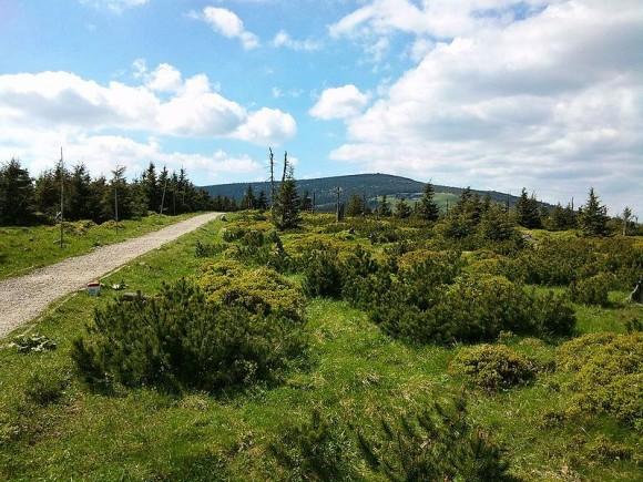 Dočasné omezení vstupu mimo značené cesty platí od 20. 7. do 15. 10. 2013 kvůli borůvkářům na 15% KRNAP. foto: Maoman, licence public domain