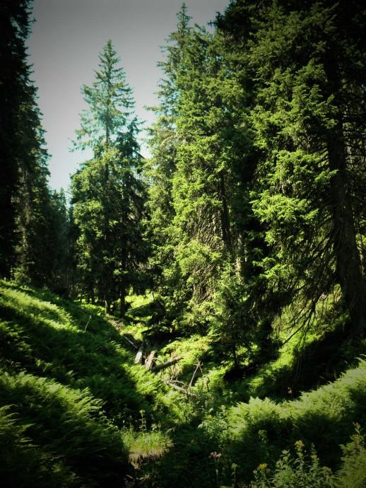 """""""Mezi čistými lesy a dobrým pivem existuje přímý vztah."""" Zdroj: Radomír Dohnal"""