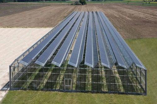 """Kromě rajčat a paprik by mohly ve sklenících zemědělci brzy """"pěstovat"""" elektřinu. Zdroj: Ifosto"""