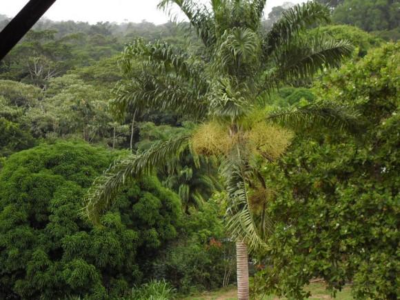 """""""Honduras – namísto nekonečné džungle tu porostou solární farmy."""" Zdroj: Tomáš Kučera"""