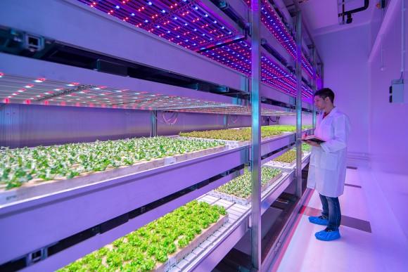 """""""Výzkum a vývoj na poli zemědělského farmaření vinteriérech by mohl proměnit svět."""" Zdroj: Philips.com"""