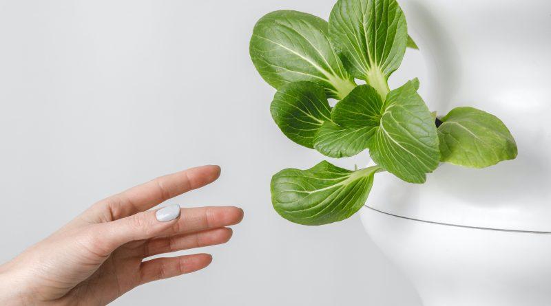 Hydropononické pěstování v domácích podmínkách. foto: unsplash, Michaela Srbová