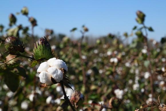 Bavlna z udržitelnějších zdrojů. foto: IKEA