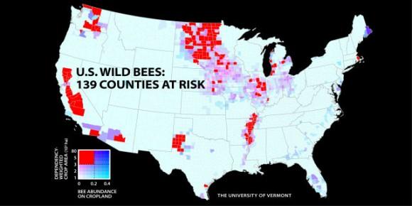 """""""Množství divokých včel drasticky pokleslo na území 139 okresů. Bohužel právě těch, kde je zemědělci nejvíce potřebují."""" Zdroj: University of Vermont"""