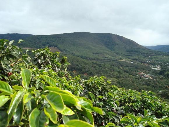 Kávová plantáž v San Marcos. Zdroj: Tarrazu/ wikipedia.en
