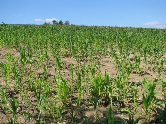 """""""V myšlence řízeného globálního zemědělství má podle Timothyho Johnse místo malé farmaření i velké agro-korporace."""" Zdroj: Martin Střelec"""