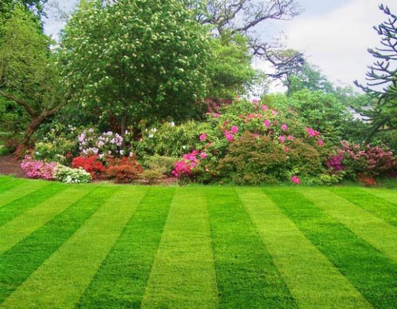 """""""Unifikovaný vzhled pečlivě udržovaných trávníků, jak jej předkládá i zahradnická společnost z horkého a prašného Texasu, se neliší od vzhledu trávníků v """"pobřežním"""" Washingtonu."""" Zdroj: lawnsoftexas.com"""