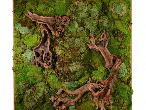 """""""Jediná zahrada která nezestárne, je ta, kterou si nepořídíte. Mechový obraz si ale poroste sám,"""" říkají zahradníci z Arizony."""" Zdroj: Inhabitat.com"""