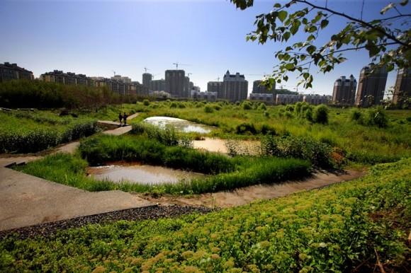 Rozloha 32,4 hektarů činí z Qunli parku největší souvislou zeleň v plánech habrinského města. foto: Turenscape