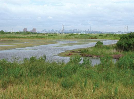 O nevyužitou zemědělskou půdu nemají v New Jersey nouzi. Zdroj: ducks.org