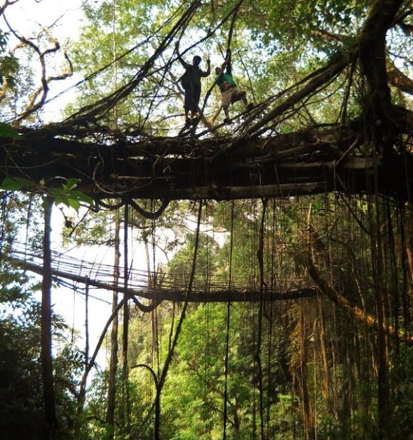 """""""Kořenové mosty jsou unikátním příkladem téměř zapomenuté přírodní architektury.""""  Zdroj: Patrick Rogers"""