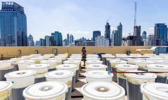 """""""Nachází se řešení otázek výživy obyvatel planety vbarelech a kádích na střeše?"""" Zdroj: Paola Di Bella/Redux"""