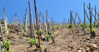 """""""Začít chytře a šetrně pěstovat stávající zásadní zemědělské plodiny, a přestat pěstovat některé na místech, kam nepatří."""" Zdroj: Alex Lines"""