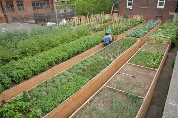 Brooklynským zahrádkářům stačí ke štěstí jen opuštěné basketballové hřiště. Zdroj: Tenth Acre Farms
