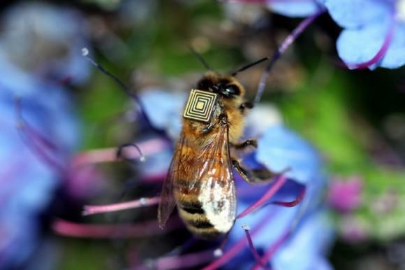 """Senzory poskytly cenné informace o životě včel uvnitř úlu i mimo něj."" Zdroj: CSIRO"