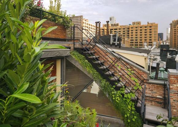 Zelené střešní terasy oživily kouzlo starého domu. Zdroj: 6sqft.com