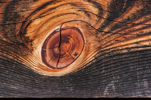 Struktura vláken uvnitř dřeva umožňuje vysokou prostupnost minerálních roztoků. foto: 池田正樹, wikimedia.org, licence Creative Commons