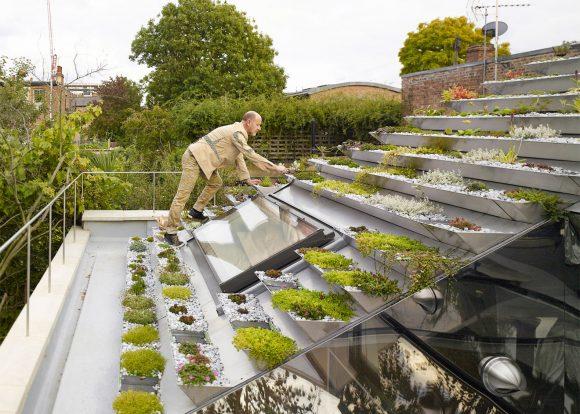 """""""Podobné střechy by na městských budovách mohly výrazně přispět ke snížení efektu tepelných ostrovů."""" Zdroj: Hayhurst&Co"""