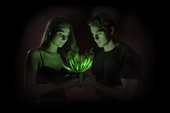 Svítící rostlina Starlight Avatar společnosti Bioglow