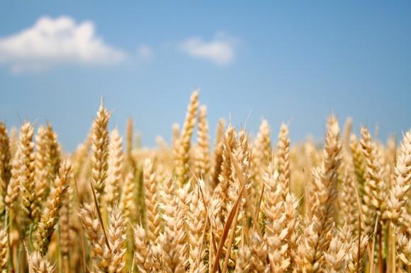 Zpráva švýcarské EMPA tvrdí, že bude zapotřebí přehodnotit dosavadní vztah vůči biopalivům. Autor fotografie: Amalrik/sxc.hu