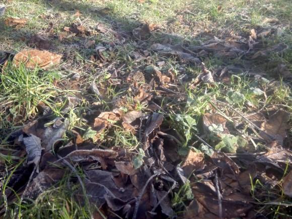 """""""Spadané listí není nepřítel. Trávník vám ochrání před mrazem a ještě ho dobře pohnojí."""" foto: Ekologické bydlení"""