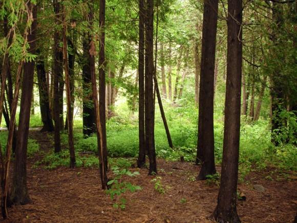 Kanadské lesy - nekonečná zásobárna kvalitního dřeva