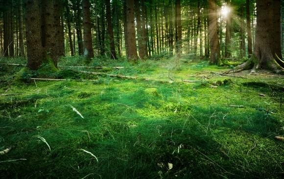 Zhodnotit ekologické služby a zavést ekologický účet. Nic nového, řeklo by se. Jenže tentokrát ne v měřítku států, ale korporací. foto: Krappweis/sxc.hu