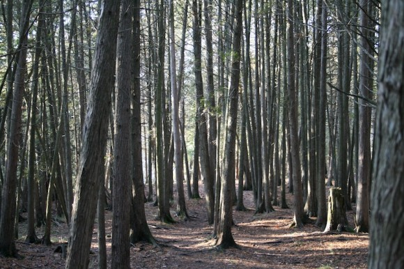 Lesy produkují každý rok obrovské množství biomasy, která může být využita pro výrobu biopaliv, foto. sxc.hu/ninetyone