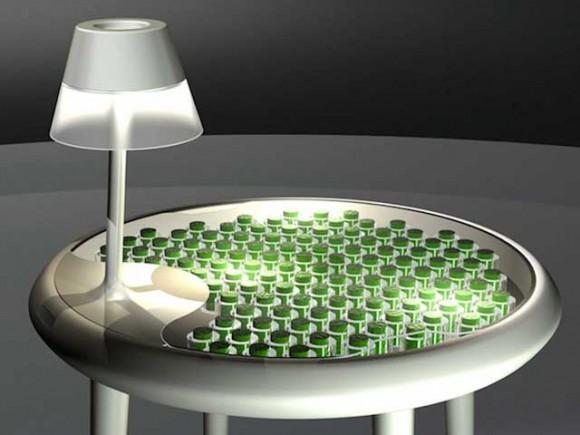 Mechový stůl aneb biofotovoltaika v praxi. Chcete mít doma takovou přírodní elektrárnu? foto: Biophotovoltaics