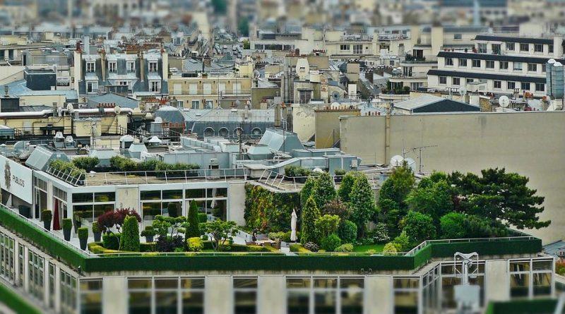 zeleň ve městech