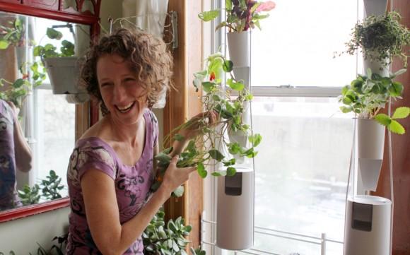 Je libo čerstvé bylinky nebo zeleninu do salátu ? Zdroj: Kickstarter.com