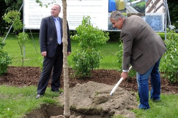 Andrzej Santarius z AWT-Rekultivace (vlevo) a zástupce starosty Dalibor Madej sází strom v Ostravě-Třebovicích. foto: Ostrava