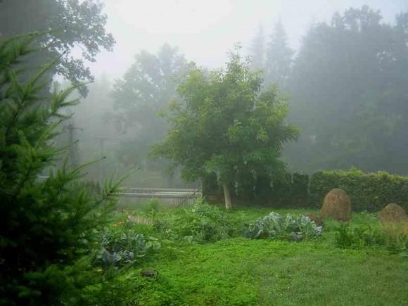 O přírodní zahrady není třeba se starat jako o klasické - jsou pak ale o to krásnější, foto: Tomáš Svoboda