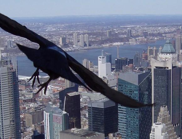 Ekologicky šetrné budovy musí nově počítat také s ochranou ptáků, foto: sxc.hu/hbrinkman