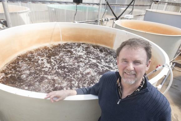 Chris Langdon u kádě s rostoucími řasami. foto: OSU