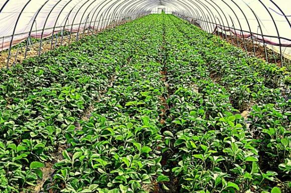 """""""Izolovaný ekosystém bublinkového skleníku dokáže zhorka a slané vody vytvořit úrodu."""" foto: Peter Griffin"""