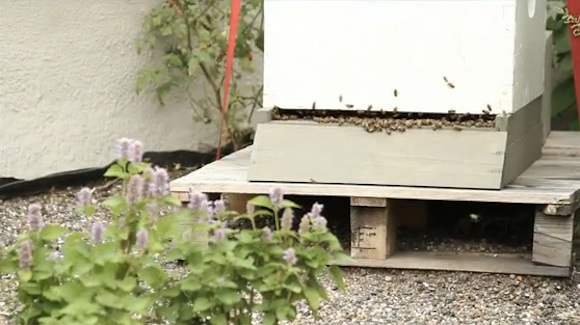 Proč neobohatit městský ekosystém o opylovače a sebe o trochu medu?