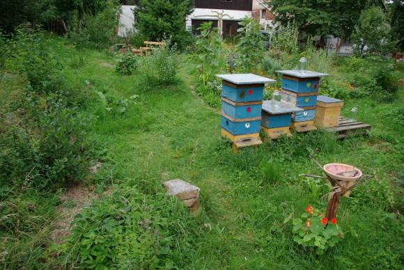 Včely - pylné spoluobyvatelký přírodních zahrad, foto: Tomáš Svoboda