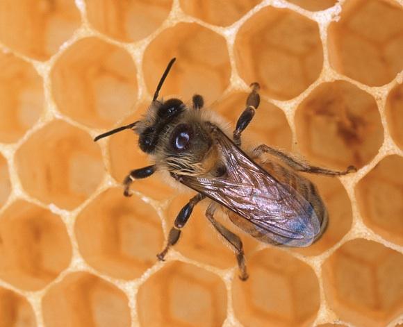 kvalita ovzduší - včela - med