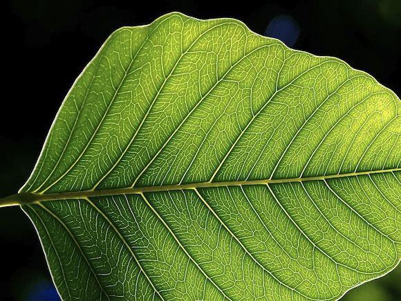 list rostliny fotosyntéza