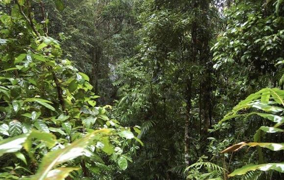 listy rostlin v Džungli